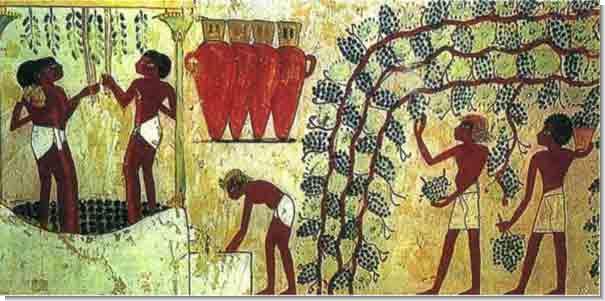 Сбор винограда и изготовление вина в Древнем Египте