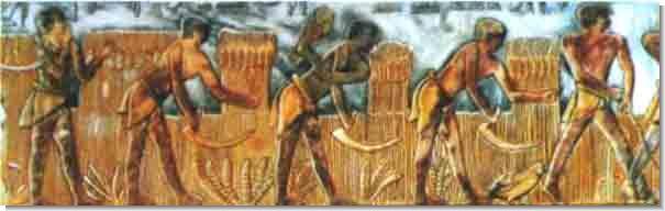 Хозяйственные работы египтян.
